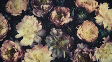 Vintage Bouquet Of Beautiful Peonies On Black. Floristic Decoration. Floral Background. Baroque Old Fashiones Style. Natural Flowers Pattern Wallpaper Or Greeting Card