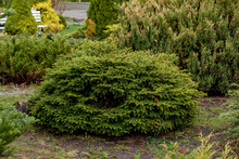 Garden, Landscape Of Geometric Shape Bush And Shrub Decorate With Colorful Flower Blooming In Green