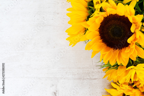 Poster de jardin Tournesol Sunflowers on white