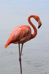 flamingo dominikanski zoološki vrt