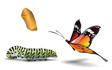Butterfly And Caterpillar On T...