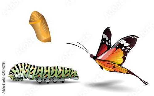 Leinwand Poster butterfly and caterpillar on the white background