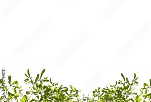 Obraz na plátně  Isolate leaf on the white background