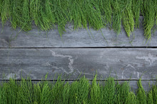 Horsetail On Wooden Table. Horsetail Branch.  Field Horsetail Bunch. Horestail Gray Background