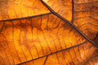 Leinwandbild Motiv Dry leaf texture and nature background. Surface of brown leaves material.