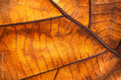 Foto-Lamellenvorhang - Dry leaf texture and nature background. Surface of brown leaves material. (von Lunatictm)