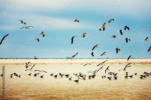 Seagull colony at a coast