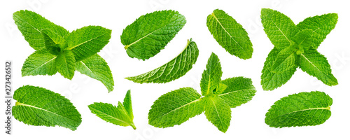Fototapeta Fresh mint leaves isolated on white background obraz