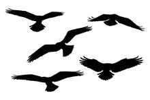 Flying Eagles. Vector Birds. White Background.