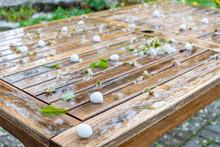 Klimaveränderung Hagelschauer Im Frühling Im Garten