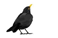 Vector Bird. Common Blackbird....