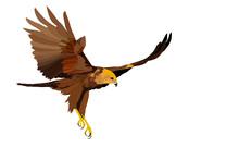 Bird Of Prey. Flying Bird. Bir...