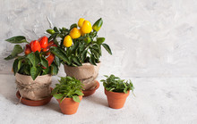 Decorative Pepper And Basil In...