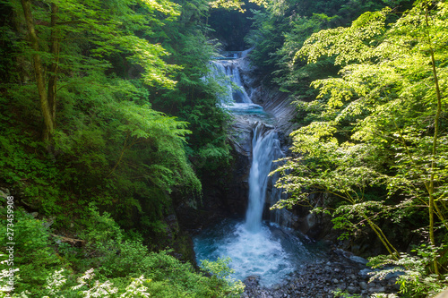 Aluminium Prints Forest river 新緑の西沢渓谷