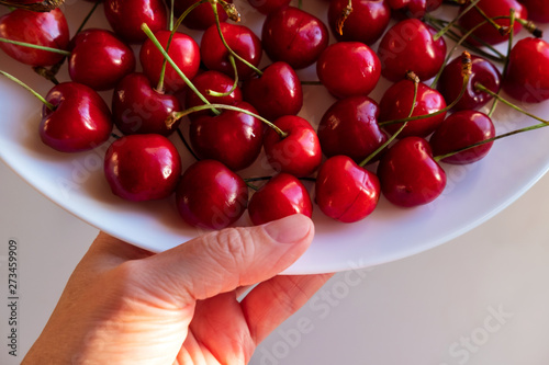 Hand holding plate with cherries top view  Ripe summer