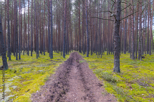 Canvas Print Firebreak