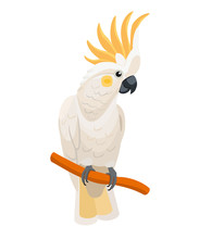 Vector,trendy,stylized,nature,zoo,banner,animal,art,bird,card,cartoon,character,cockatoo,cute,design,exotic,funny,graphic,greeting,holiday,icon,illustration,isolated,parrot,summer,tropical,white Backg