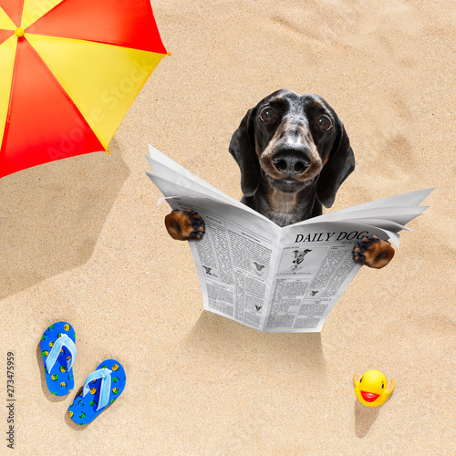 Poster Chien de Crazy dog at the beach reads newspaper