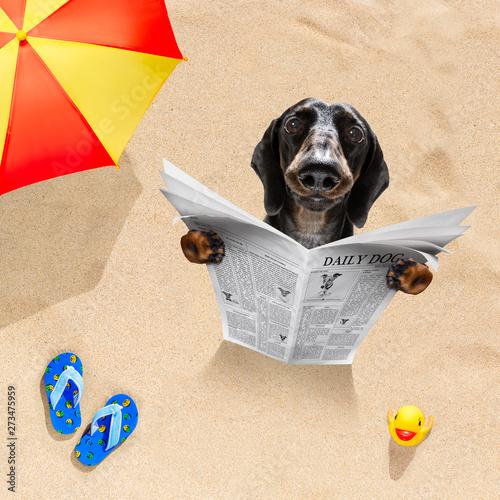 Photo sur Toile Chien de Crazy dog at the beach reads newspaper