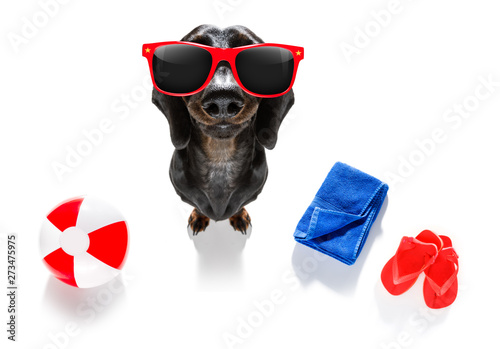 Poster Chien de Crazy summer vacation holiday dog