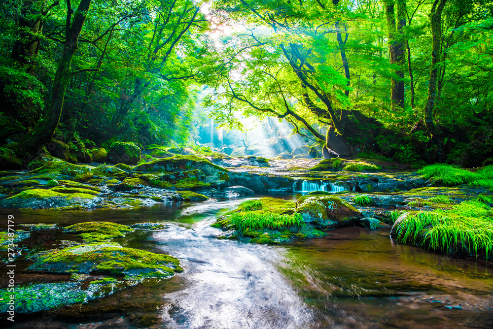 Fototapety, obrazy: Kikuchi valley, waterfall and ray in forest, Japan