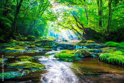 Poster Forest river Kikuchi valley, waterfall and ray in forest, Japan