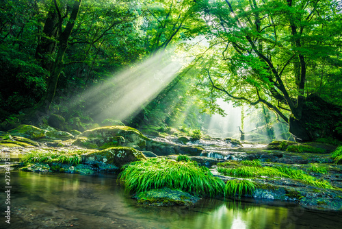 Poster Green Kikuchi valley, waterfall and ray in forest, Japan