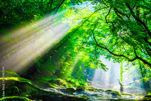 Printed kitchen splashbacks Forest river Kikuchi valley, waterfall and ray in forest, Japan