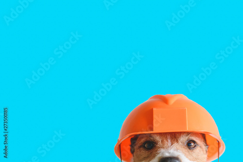 Foto Safety, construction, DIY concept - cute dog in hard hat on color background