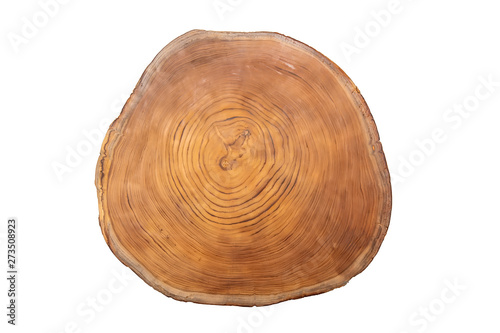 Stampa su Tela  Large circular piece of wood cross section with tree ring texture pattern isolat