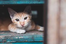 Stray Kitten,cat In The City