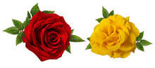 Yellow And Red Roses Isolated On White Background With Clipping Path