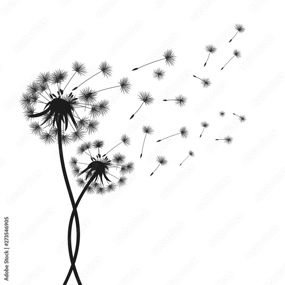 Fototapety, obrazy: Two abstract black dandelion, flying seeds of dandelion - stock vector