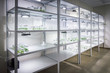 Racks with test tubes with micro plants in vitro illuminated by artificial light