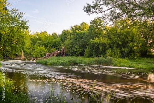 Rzeka Bzura w lesie,