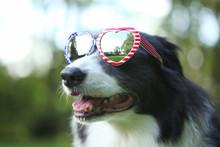 Border Collie Dog Wearing Hear...