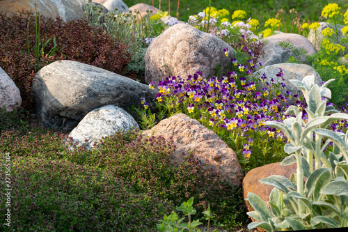 Foto auf Leinwand Schokobraun Blooming violets and other flowers in a small rockery in the summer garden