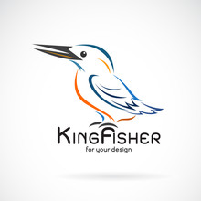 Vector Of Kingfishers Bird(Alc...