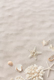beach / sea themed banner or header with beautiful shells, corals and starfish on pure white sand - summer concept - 273577906
