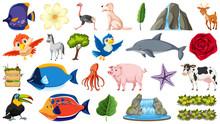 Set Of Many Animal