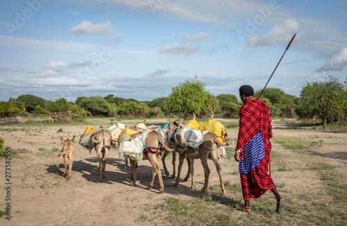 Fotografiet masai man traveling with donkeys to fetch water