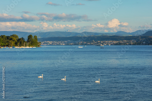 Deurstickers Australië Lake Zurich at sunset in summer, summits of the Alps in the background, view from the city of Zurich