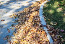 Piles Of Dried Autumn Leaves Blown Against A Curb In Residential District With Some Up On Grass Of A Lawn And Dappled Shadows - Selective Focus