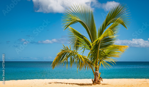 Palm tree on tropical beach.