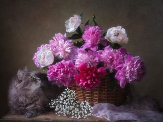 Fototapeta Do sypialni Splendid bouquet of peonies and curious kitty