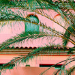 canvas print picture Plants on pink fashion concept. Palm. Canary island