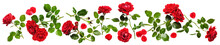 Red Roses Composition Banner.