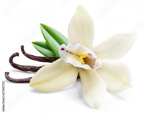 Photo sur Toile Orchidée Dried vanilla sticks and orchid vanilla flower isolated on white background.