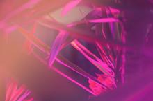 Deep Purple Pink Palm Leaves P...