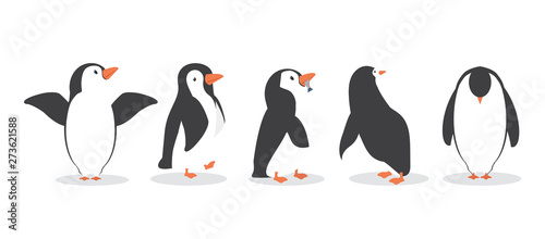 Fotomural penguin characters in different poses set